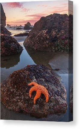 Starfish Photographs Canvas Prints