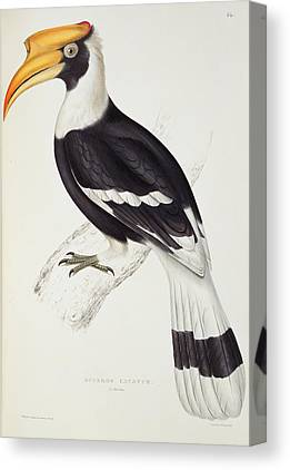 Hornbill Canvas Prints