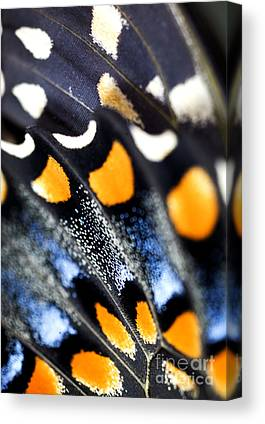 Low Wing Canvas Prints