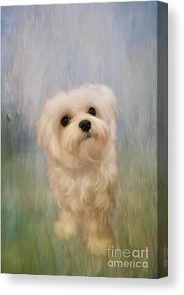 Tiny Dogs Canvas Prints