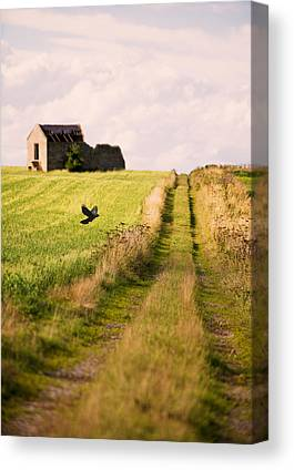 Country Lanes Photographs Canvas Prints