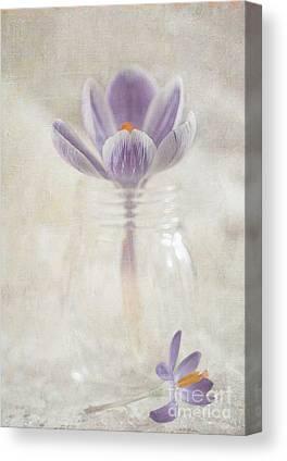 Flypaper Textures Canvas Prints