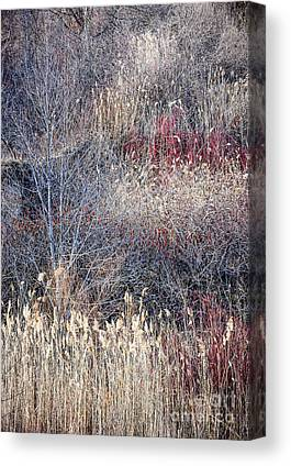 Designs Similar to Dry Grasses And Bare Trees