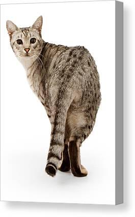 Ocicats Canvas Prints