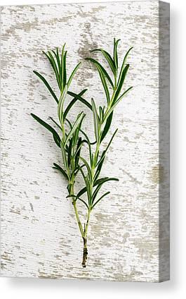 Herbs Canvas Prints