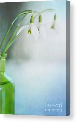 Snow Drops Canvas Prints