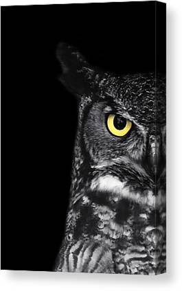 Owl Canvas Prints