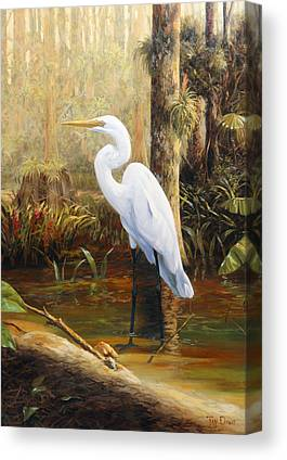 Great Egret Canvas Prints
