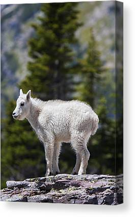 Goat Rocks Wilderness Canvas Prints