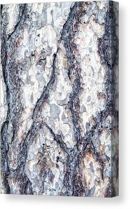 Forestry Canvas Prints
