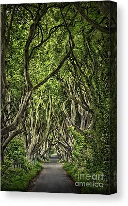 Dark Hedges Canvas Prints