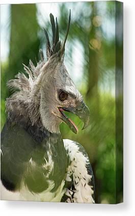 Harpy Eagle Canvas Prints