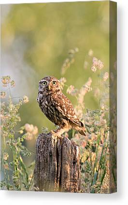 Early Spring Canvas Prints