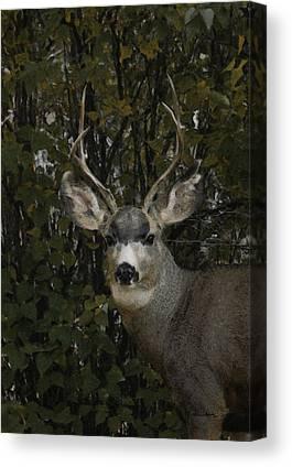 Mule Deer Digital Art Canvas Prints