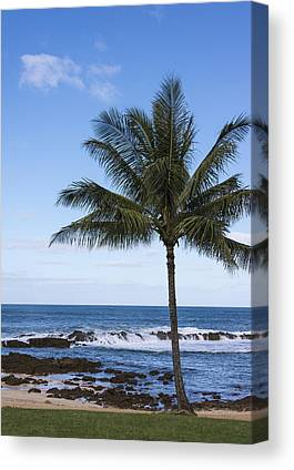 Perfect Palm Tree Sharks Cove At Sunset Beach Oahu Hawaii Hi Seascape Canvas Prints