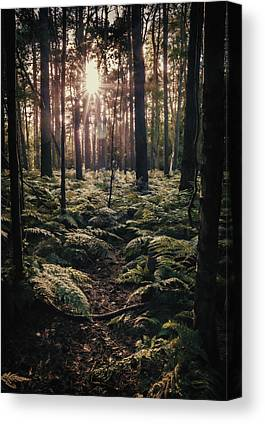 Forest Floor Canvas Prints