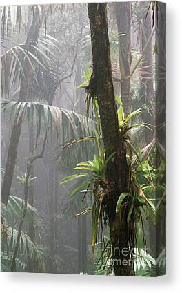 Epiphytic Bromeliads Canvas Prints