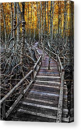 Mangrove Forest Canvas Prints
