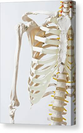 Human Joint Canvas Prints