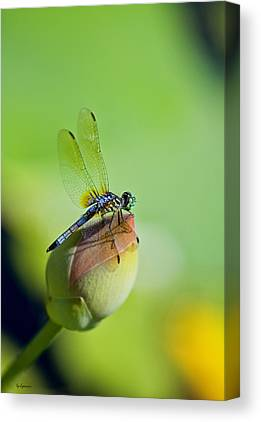 Dragon Fly On A Lily Canvas Prints