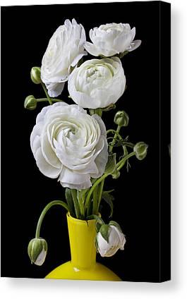 White Ranunculus Flower Yellow Canvas Prints