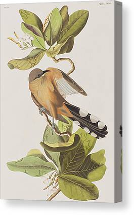 Cuckoo Drawings Canvas Prints