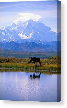 Wildlife Landscape Canvas Prints