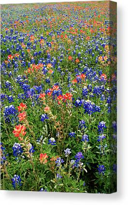 Wildflowers In Texas Canvas Prints
