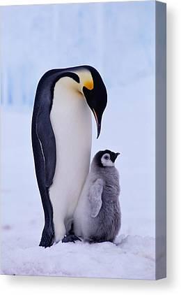 The Penguin Canvas Prints