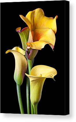 Calla Lily Canvas Prints