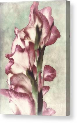 Gladiola Canvas Prints