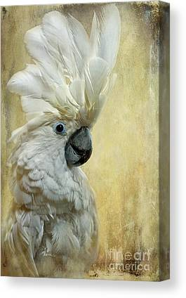 Cockatoo Canvas Prints