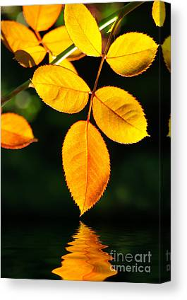 Wet Leaves Canvas Prints