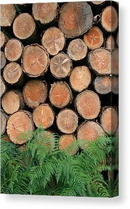 Deforestation Canvas Prints