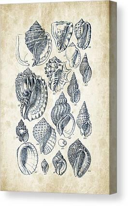 Mollusca Canvas Prints