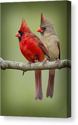 Cardinal Canvas Prints