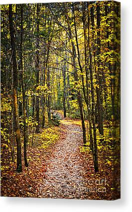 Wooded Path Canvas Prints