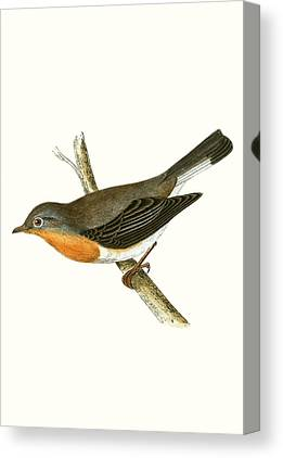 Flycatcher Canvas Prints