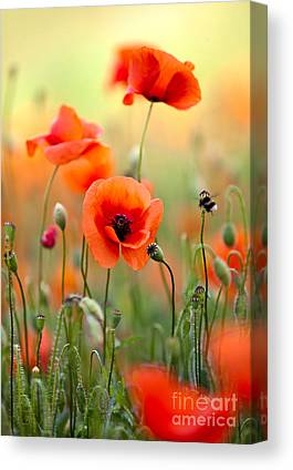 Red Poppies Canvas Prints