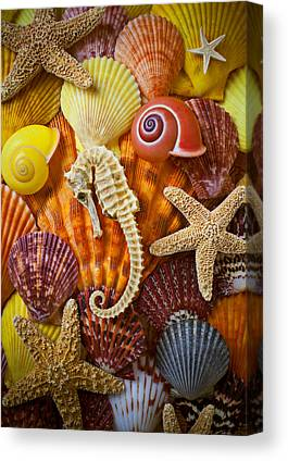 Seashell Fine Art Canvas Prints