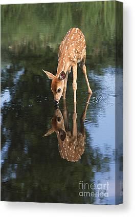 Mirror Image Canvas Prints