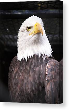 Eagle Canvas Prints
