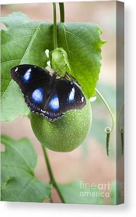 Passionflower Photographs Canvas Prints