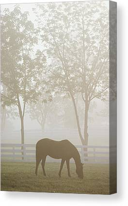 Kentucky Horse Park Canvas Prints