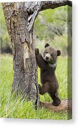 Teddy Bear Photographs Canvas Prints