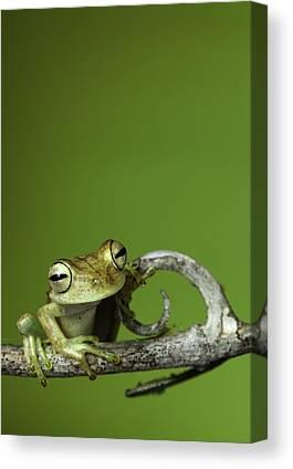 Rainforests Canvas Prints