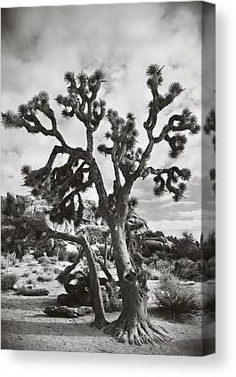 Black Rock Desert Canvas Prints