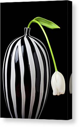 White Tulip Canvas Prints