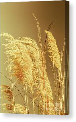 Dry Brush Canvas Prints