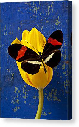 Tulip Canvas Prints